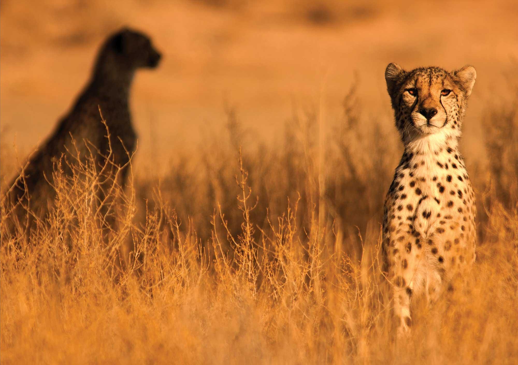 Shadow-brothers-c-Bernd-Wasiolka-wildphotolife-e